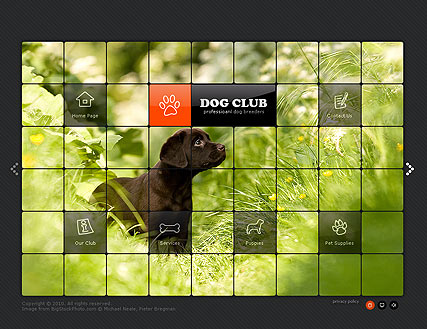 Dog Club, Easy flash template